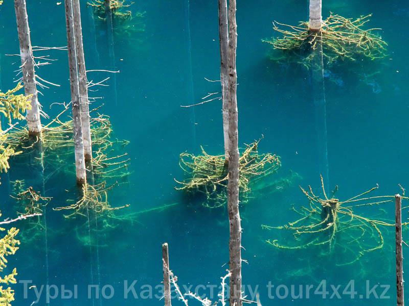 Озеро Каинды. Затопленный лес.